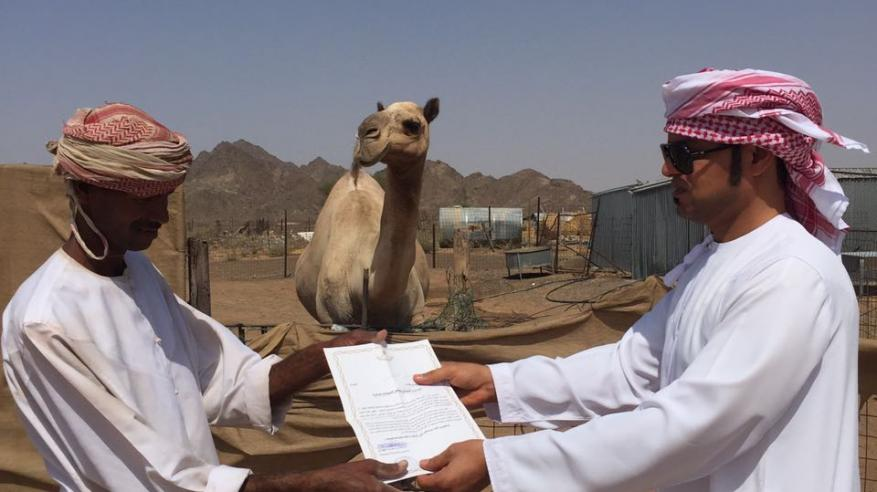حملة توعوية للحد من مخاطر الحيوانات السائبة بالبريمي