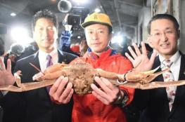 سلطعون بحري بخمسة ملايين ين في مزاد باليابان