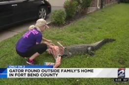 بالفيديو.. فتاة تسيطر على تمساح ضخم