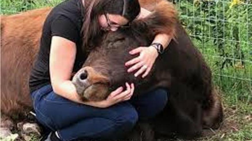 عناق البقر (1)