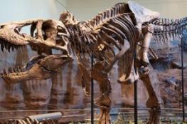 اكتشاف أصغر ديناصور في الصين