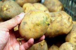 """بيان من وزارة الزراعة حول """"البطاطس الخضراء"""" في الأسواق العمانية"""