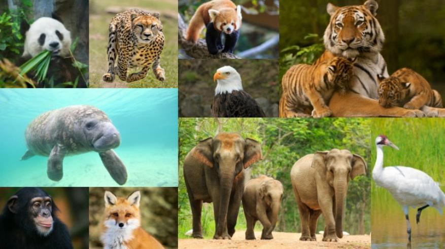 العلماء يقرعون أجراس الخطر: مليون نبات وحيوان مهدد بالانقراض