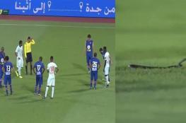 بالفيديو.. ثعبان سام يوقف مباراة كرة قدم بالسعودية