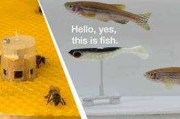 بالفيديو.. النحل يتحدث مع الأسماك في تجربة علمية للمرة الأولى