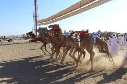 منافسة قويّة في انطلاقة المحطة الثانية للمهرجان السنوي لسباقات الهجن بالمضيبي