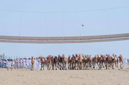 انطلاق المحطة الثالثة من المهرجان السنوي لسباقات الهجن الأهلية بولاية المضيبي