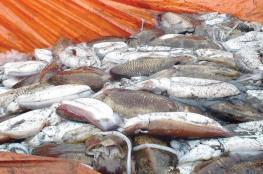 انتهاء موسم صيد الحبار بنهاية يناير