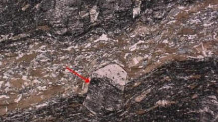 اكتشاف أقدم كائن حي على كوكب الأرض