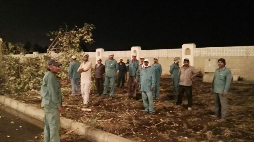 بلدية ظفار تستبدل الأشجار غير المتناسقة بالنارجيل في شارع الرباط