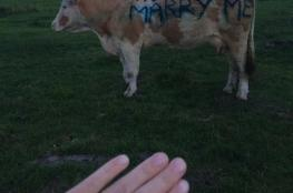 شاهد..مزارع يطلب يد فتاة للزواج  بطريقة غريبة