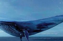 """""""انستجرام"""" تحذر من """"الحوت الأزرق"""""""