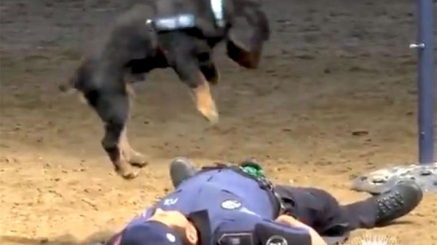 بالفيديو.. أول كلب يحترف الإسعاف