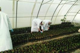"""انطلاق """"ثمرة"""" لتدريب طلاب المدارس على المشاريع الزراعية والحيوانية والسمكية"""