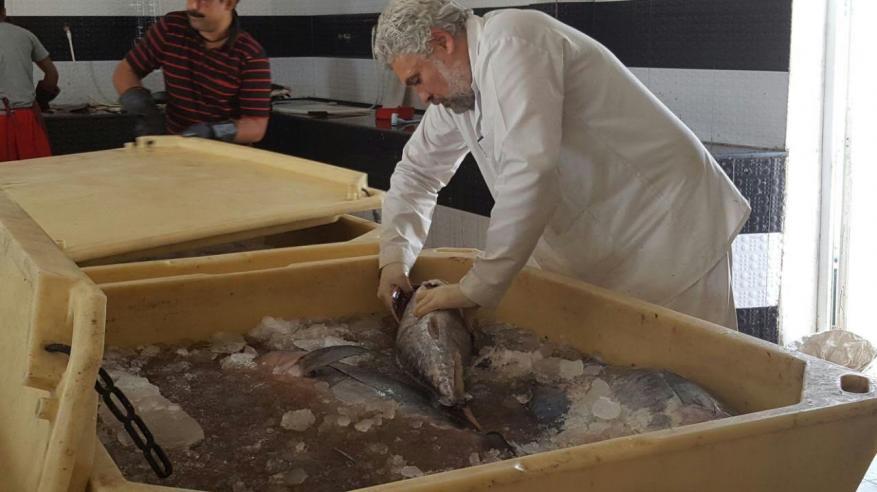 بلدية المضيبي تتلف 500 كيلو من الأسماك