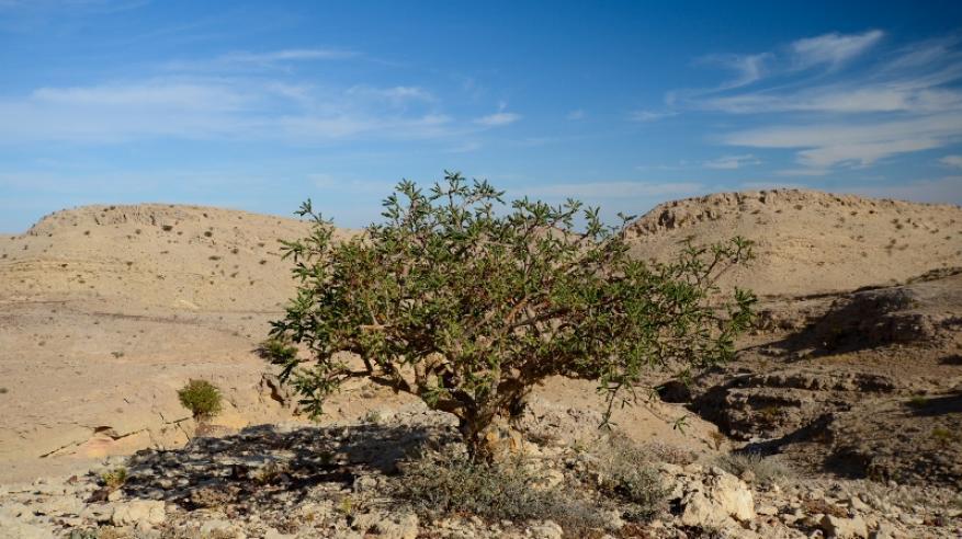 محمية جبل سمحان