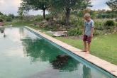 العثور على فرس نهر في مسبح بأحد المنازل