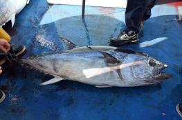 صيد سمكة قيمتها 3 ملايين دولار