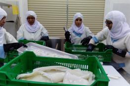 جهود بارزة للمرأة العمانية في تنمية القطاع السمكي.. وبصمة نسائية واضحة في عمليات الإنتاج والتصنيع الغذائي