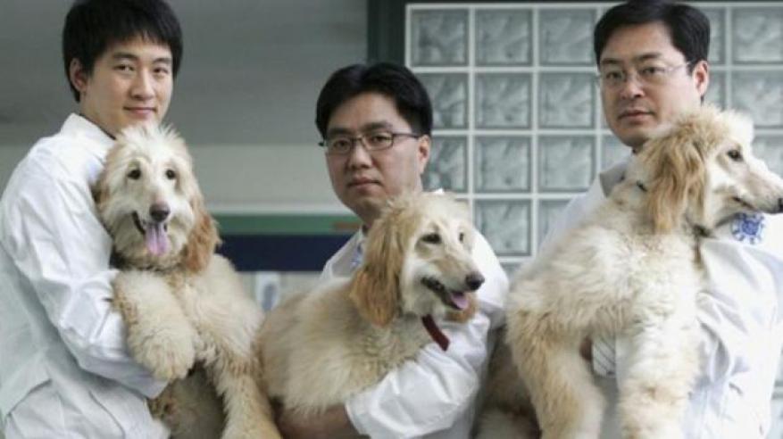 استنساخ الكلاب.. خيال علمي يتحول إلى واقع