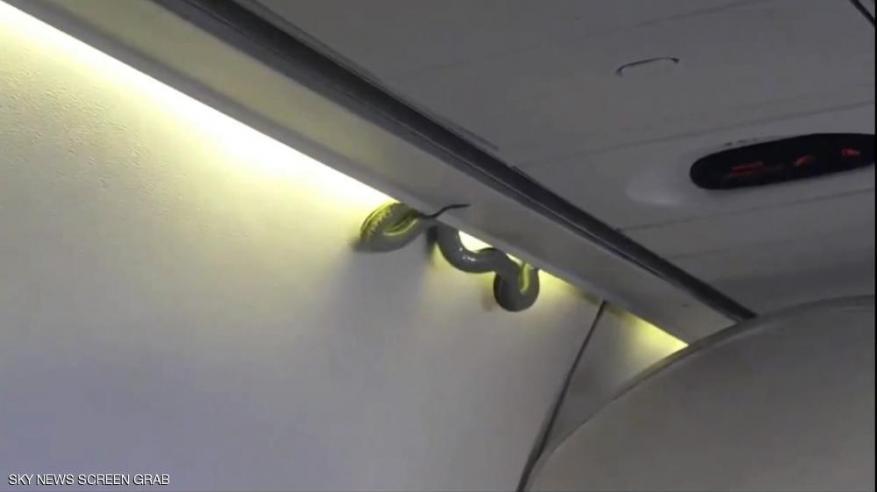 بالفيديو.. ثعبان يقتحم طائرة ويثير ذعر الركاب