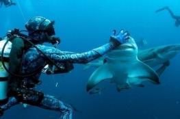 بالصور.. أول حالة تنويم مغناطيسي لأسماك القرش