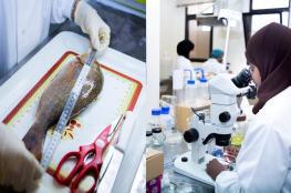 """""""التنمية الزراعية والسمكية"""" تواصل أبحاث مشروع """"الطفيليات المائية"""""""