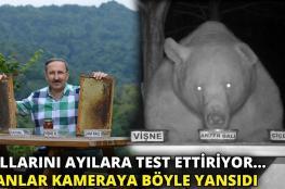 بالفيديو.. نحّال تركي يستعين بدببة لتجربة العسل!