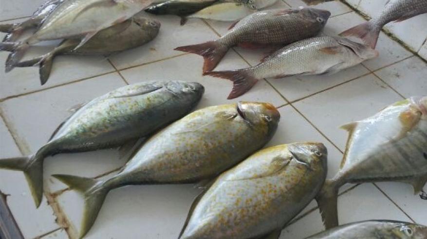 حركة متوسطة في أسواق الأسماك مع ثبات الأسعار في الأسبوع الثاني من رمضان
