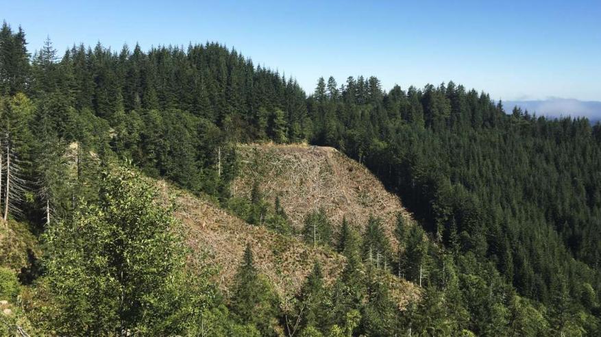 فقدان 24 مليون فدان من أراضي الطبيعة بأمريكا في 16 عاما