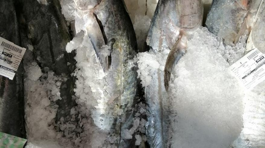 من كميات الأسماك المنزلة بالسوق