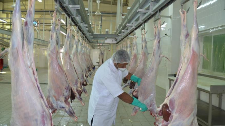 جانب للذبح في المسالخ وفحص اللحوم