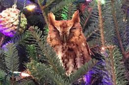 شجرة عيد الميلاد تصدم أسرة في جورجيا.. والسبب بومة!