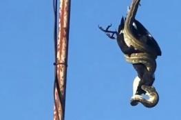 فيديو مذهل .. أفعى تأكل طائرا ضخما في الهواء