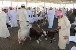 هبطة العيد في سوق عبري.. موروث عماني أصيل ووجهة تسويقية بارزة لأبناء الولايات