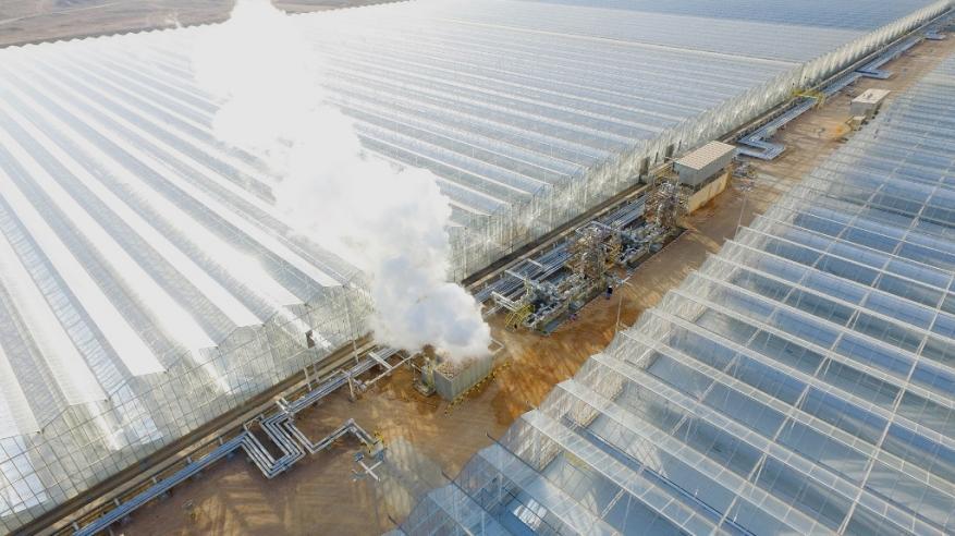 Miraah Solar Steam