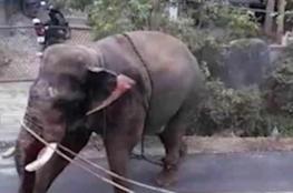 بالفيديو .. فيل غاضب يبث الهلع في قرية هندية