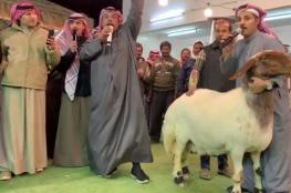 بالفيديو.. أغلى نعجة في الكويت بـ 40 ألف دينار