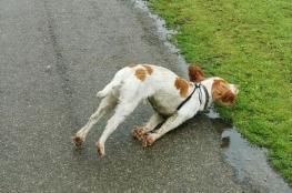 """بالفيديو.. كلب يتعرض لحالة """"غامضة"""" عند التوتر!"""