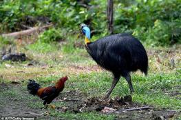 """""""أخطر طائر في العالم"""" يقتل صاحبه"""