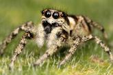 أبحاث علمية: التغير المناخي يؤجج عدوانية العناكب