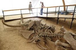 اكتشاف مقبرة ديناصورات عمرها 220 مليون سنة في الأرجنتين..فيديو وصور
