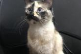 بالفيديو.. قطة ذكية تنقذ طفلا من موت محدق