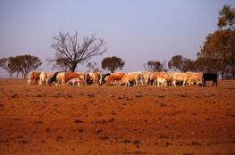 الجفاف يجتاح أستراليا