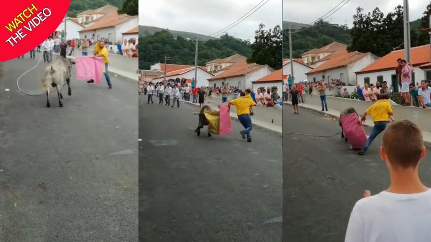 فيديو مروع.. ثور هائج في مواجهة رجل وطفله