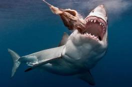 بالفيديو..معركة شرسة  بين كلاب وأسماك قرش