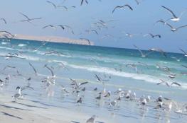الدقم.. وجهة سياحية تتميز بمواقع التخييم ومناخ معتدل على مدار العام