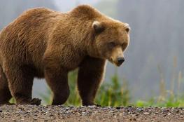 بالفيديو.. امرأة تحتفظ بدب مهدد بالإنقراض ظنا منها أنه كلب!