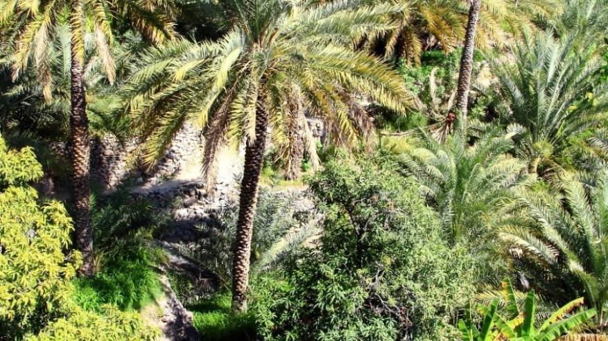 Al Dakheleyah - Misfat Al Abriyeen (33)