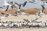 شواطئ جزيرة مصيرة تجتذب أكثر من 15 ألف سائح